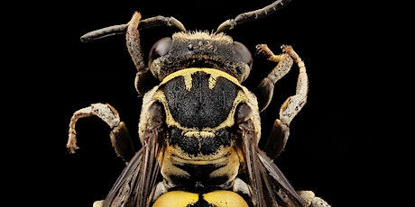 Afterschool Talk: Understanding Insects Utilizing High-Resolution Images tickets