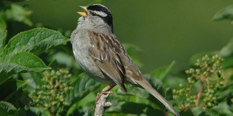 Gardening for Birds with California Native Plants tickets