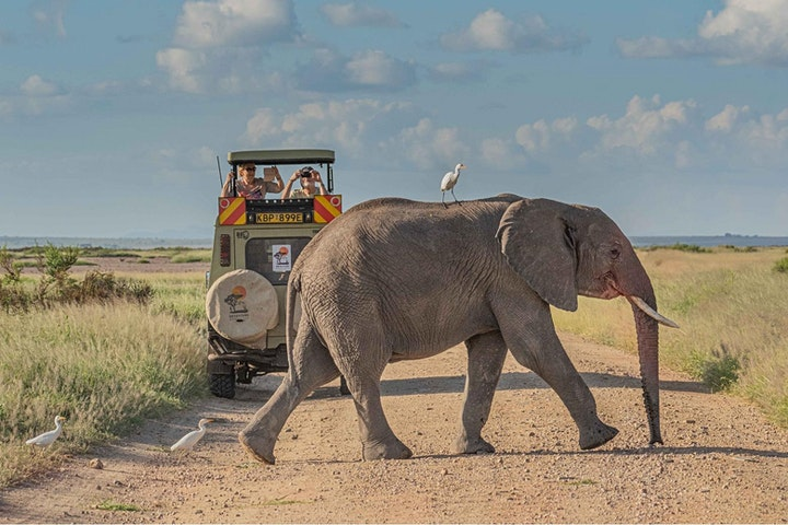 Kathy Karn - Elephants of Amboseli image