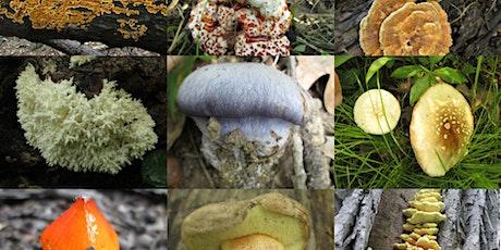 Intro to Mushroom Identification Nature Walk - Watersmeet Woods tickets