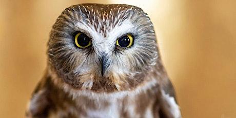 Owl Banding at the Beaverhill Bird Observatory tickets