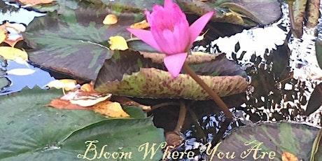 Reiki Meditation and Yoga Nidra--via ZOOM tickets