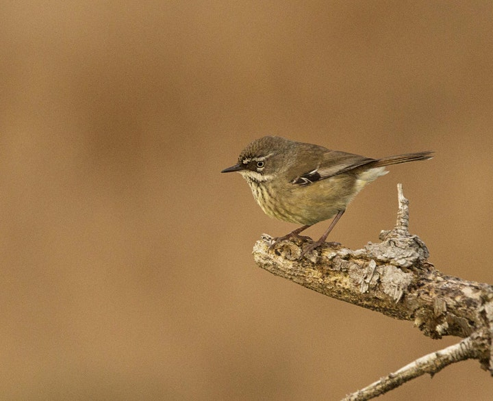 Bird  Photography for Kids and Teens image