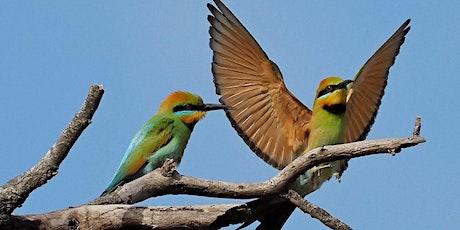 BirdLife WA: Talk  @ Wanneroo Library, Wanneroo tickets