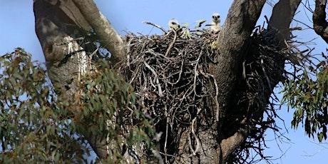 Where Do Eagles Nest? with Simon Cherriman tickets
