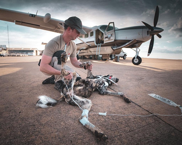 Remembering African Wild Dogs launch - live and virtual! image