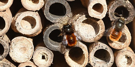 Insect Hotel Workshop for Kids - Boya tickets