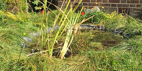 How to get the best out of water in your garden tickets