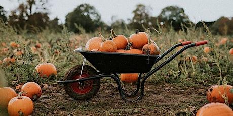 Bostin Pumpkins! Pick Your Own Pumpkins billets