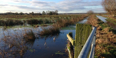 Wild Stepping Stones - smaller scale rewilding on the Somerset Levels tickets