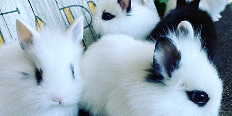 Hoppy Hour and Meditation with Bunnies at Aslin tickets