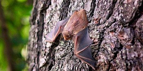 Nightime Bat Walk with Albert Nolan tickets
