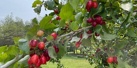 Dogwood Jam-Making - In-Person Workshop tickets