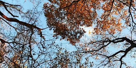 Fall Newport Tree Walk tickets