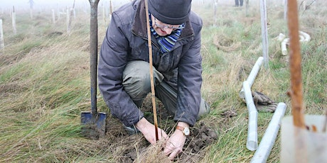 Volunteering in the Heart of England Forest -  Tree Planting Taster Event tickets