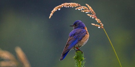 Bringing Back the Bluebirds tickets