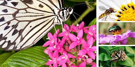 Planting a Successful Pollinator Garden with Florida Native Plants tickets