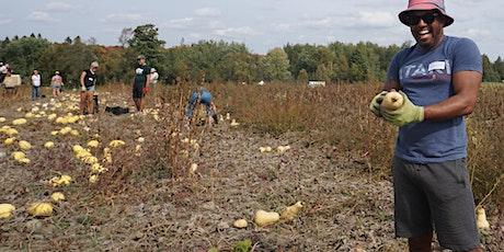 Community Harvest Days at Everdale Farm tickets