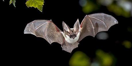 NHS EVENT: Broadgreen Bat walk! tickets