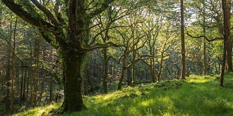 NHS EVENT: Morning Mindfulness in the Woods tickets