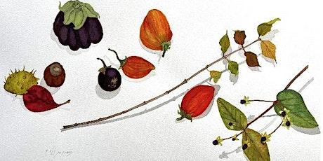 Late Season Botanical Drawing with Rebecca Allan tickets