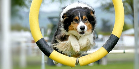 Intuitive Playground with the Animals Tuesday evening  via Zoom tickets