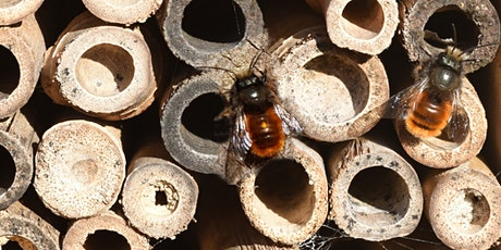Insect Hotel Workshop for Kids - Mundaring tickets