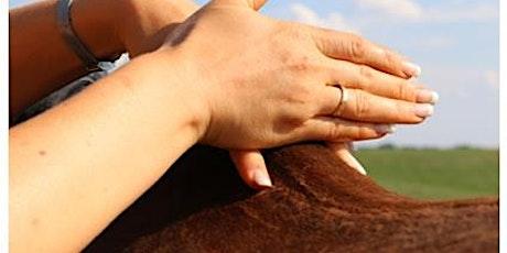 Raindrop Technique®  Massage für Pferde Tickets