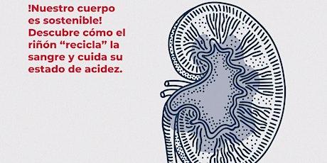 ¿Cómo funcionan tus riñones? entradas