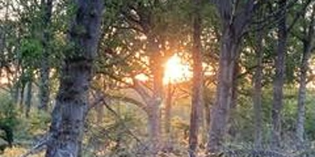Equinox Tree Walk from the Camden Forest tickets
