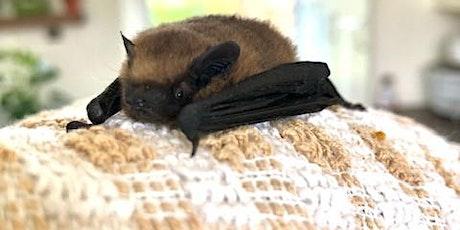 Bat Night in Bushmills tickets