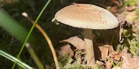 Autumnal Woodland Walk tickets