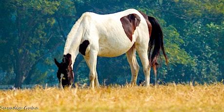 Nash County Horse Tour tickets