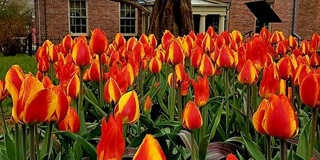 Children's Tulip Bulb Planting Workshop tickets