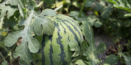 Grafting and the watermelon industry tickets