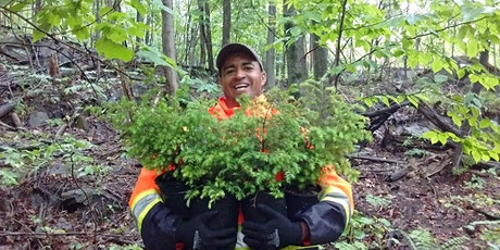 Plant a Tree Day in Montreal: Volunteer with One Tree Planted tickets