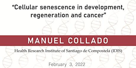 Cellular senescence in development, regeneration and cancer entradas