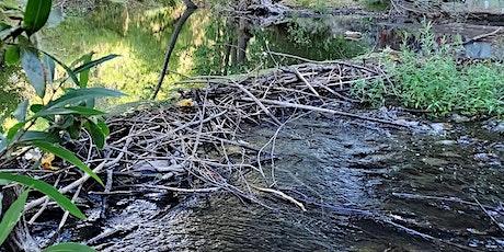 BioBlitz - Los Gatos Creek at Creekside Bridge in Campbell tickets