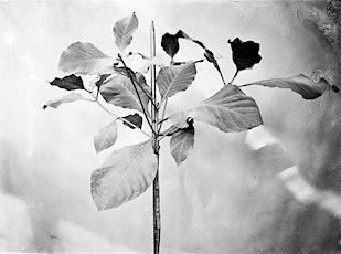 Exhibit Open House - Whitewashed Botany tickets