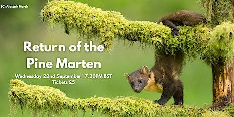 Return of the Pine Marten - Mammal Society Webinar Series tickets
