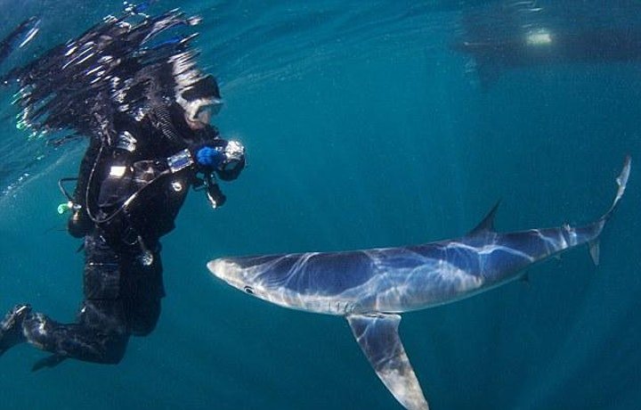 Marine Life is breathtaking...but what has it ever done for us? image