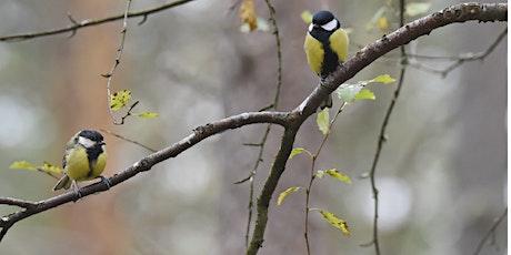 Tour birdwatching nel parco di UpTown-Cascina Merlata tickets