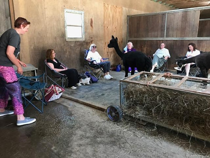Meditating with Alpacas image