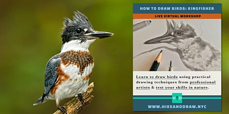 How to Draw Birds: Belted Kingfisher tickets