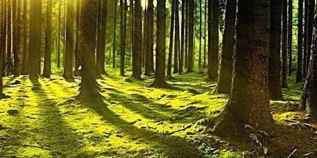 Ritorneranno i prati: dal bosco al pascolo dopo la tempesta Vaia biglietti