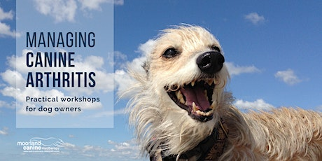 Managing arthritis in dogs: practical support for owners tickets