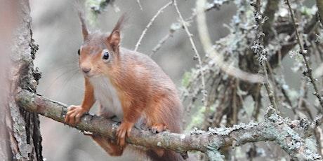 Squirrel safari tickets