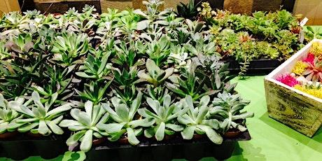 Plant Night at Ravish tickets