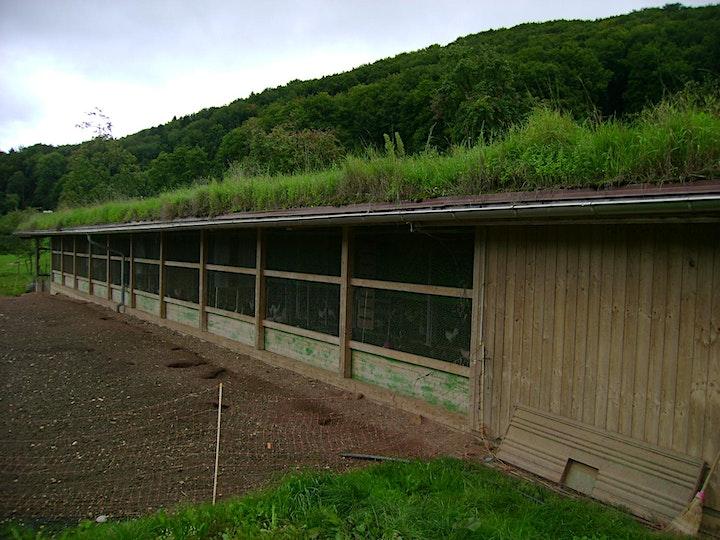 Green Roof Workshop image