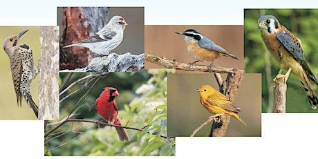 Bird Walk in the Aurora Arboretum tickets